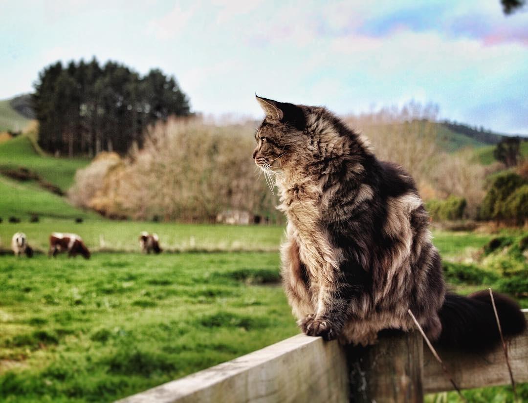cats aggressive