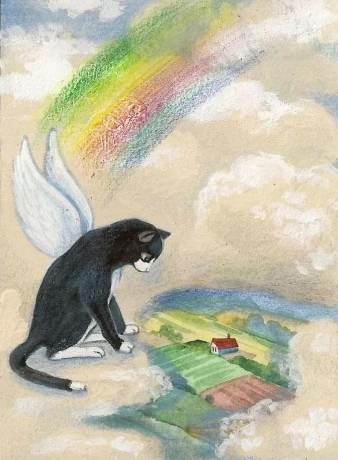losing a cat
