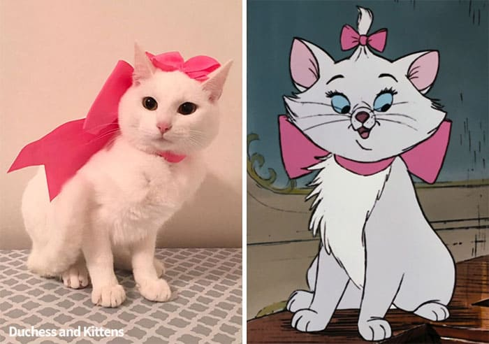 real life aristocats