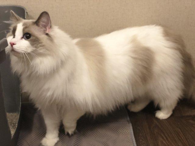 one-eyed cat returned to shelter