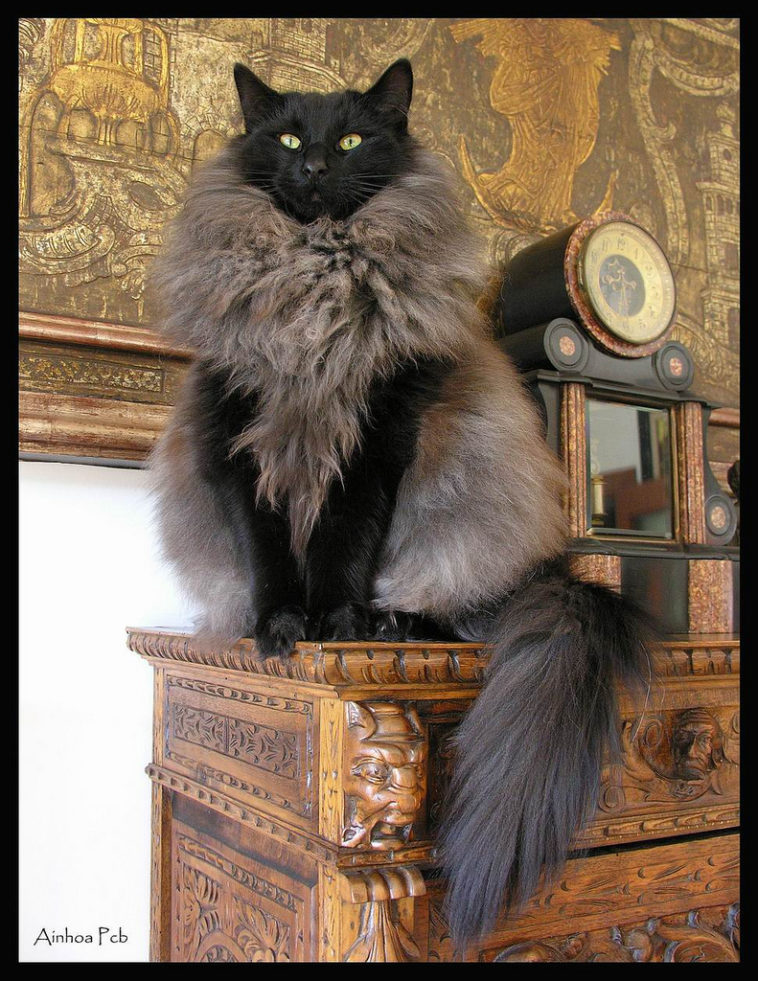 unique cat fur
