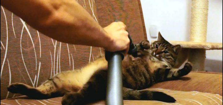 cat loves vacuum cleaners