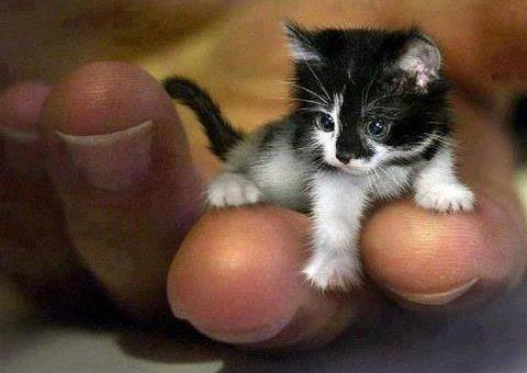 mr peebles smallest cat