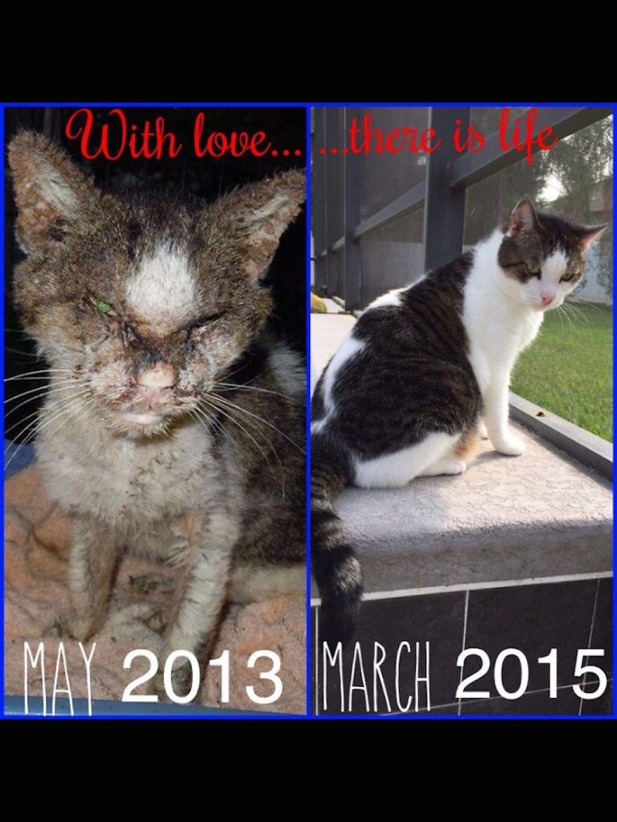 rescue cat transformation