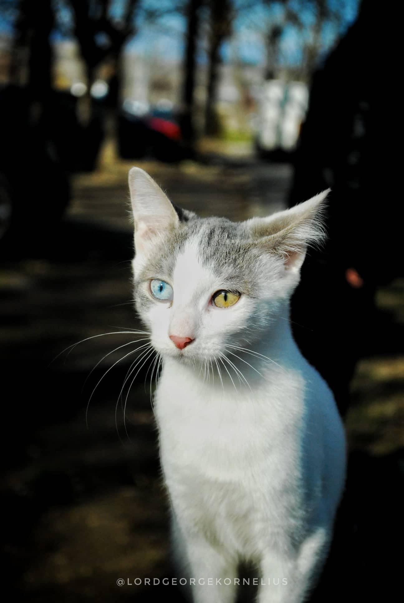 contact catman