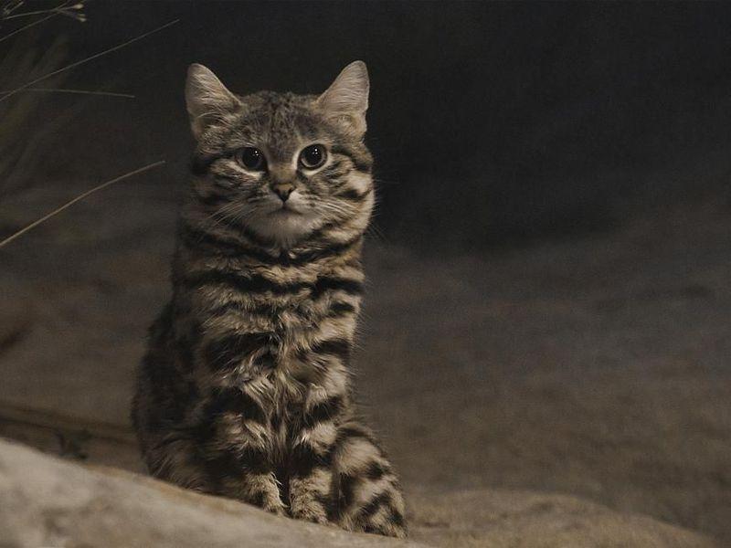 Gyra the deadliest cat