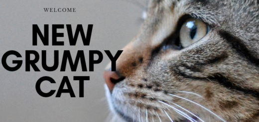 new grumpy cat