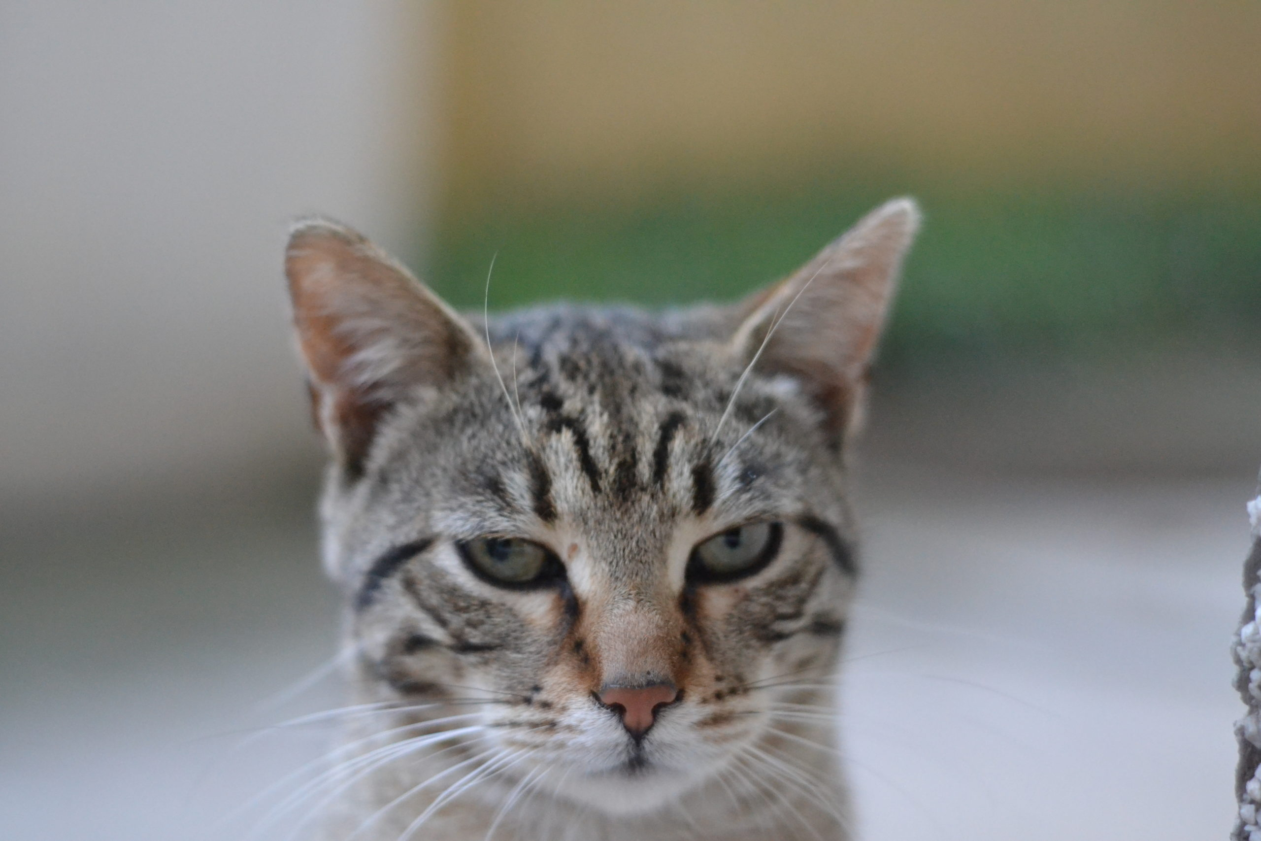 does grain-free cat food cause constipation