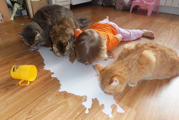 leave cats with kids