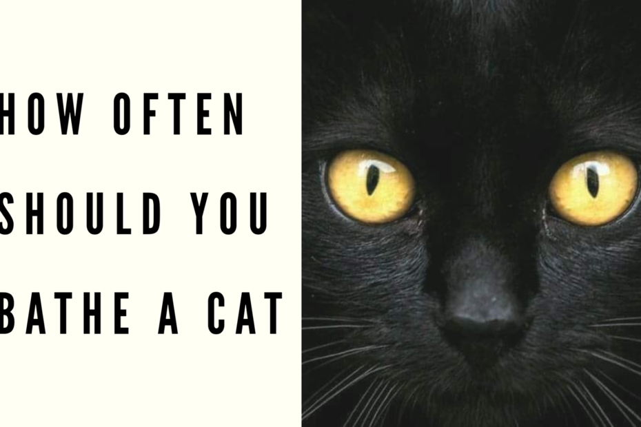 how often should you bathe a cat