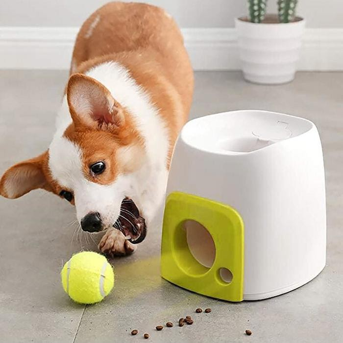toys for dogs
