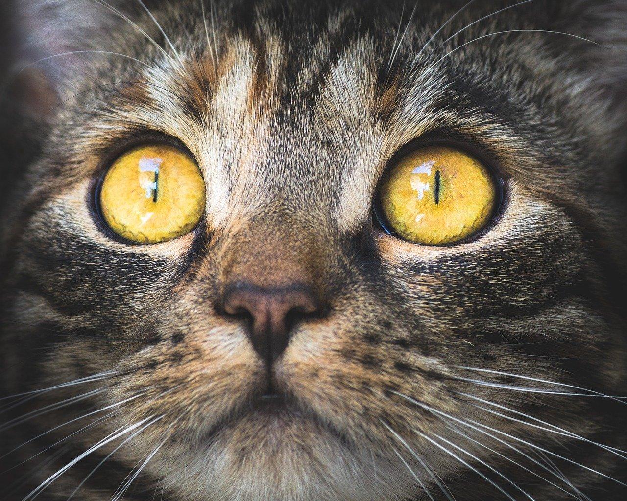 cat pupils